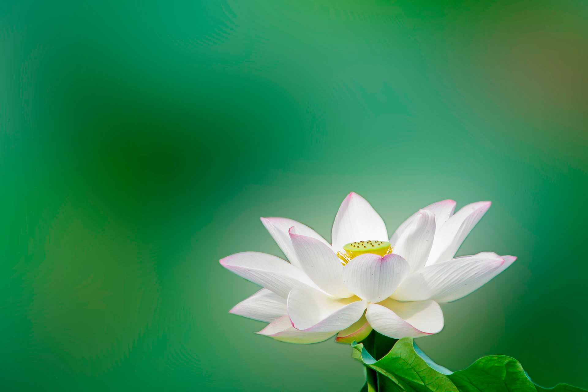 INTRODUCTION TO MINDFULNESS – 2 Hour Workshop